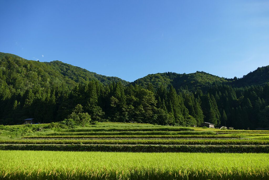 Rice terraces in front of the mountains in Shirakawago